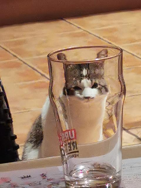 Fotografía distorsionada de gatito a través de un vaso de cristal