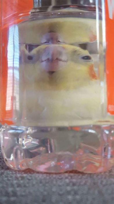 Foto distorsionada de pajarito a través de un vaso