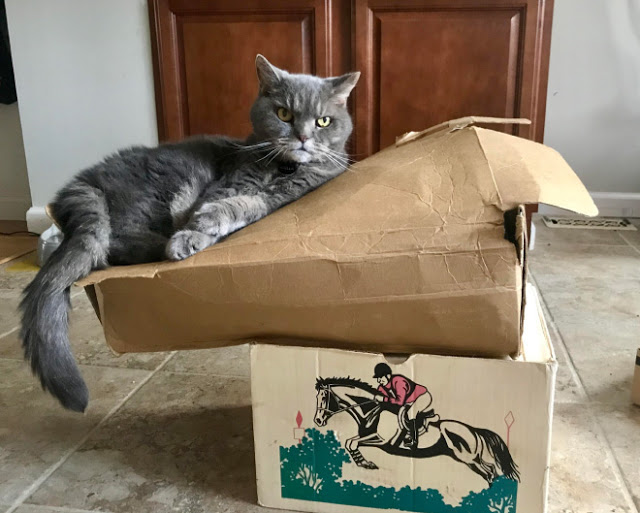 Gato acostado sobre una bolsa de papel café