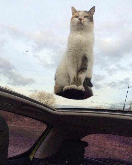 Gato sentado sobre quemacocos transparente