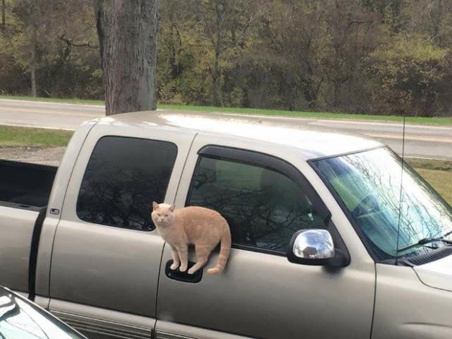 Gato parado sobre manija de camioneta