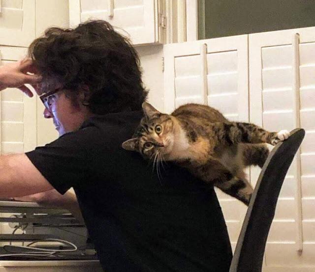 Gato acostado entre silla y su dueño