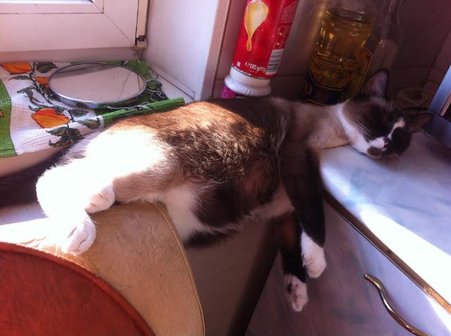 Gato acostado entre mesa y barra de cocina