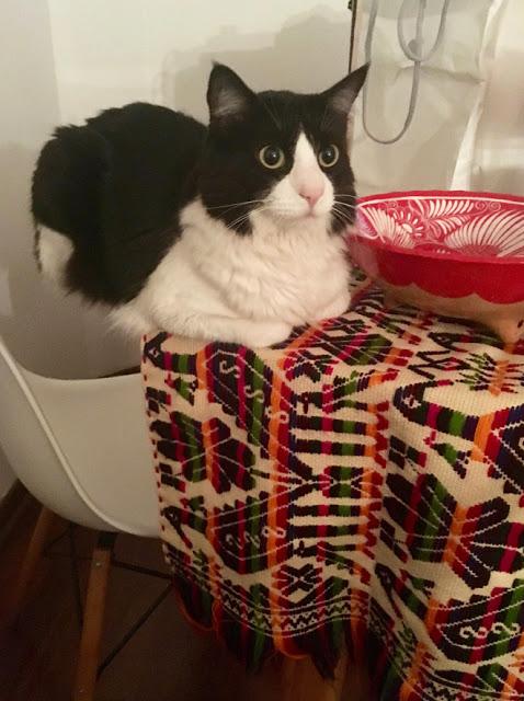 Gato blanco con negro acostado en mesa