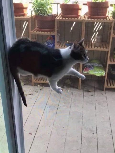 Gato blanco con negro parado en el protector de una puerta