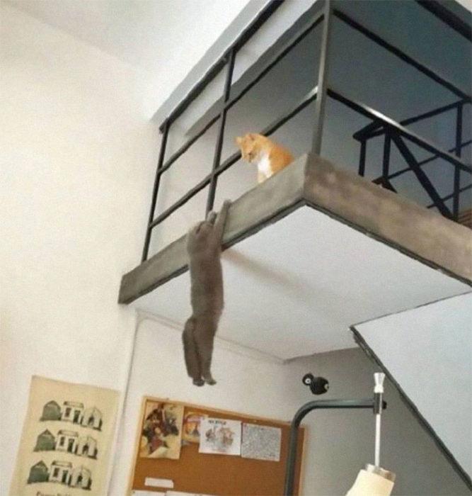 Gato colgado de segundo piso mientras otro gato naranja lo observa