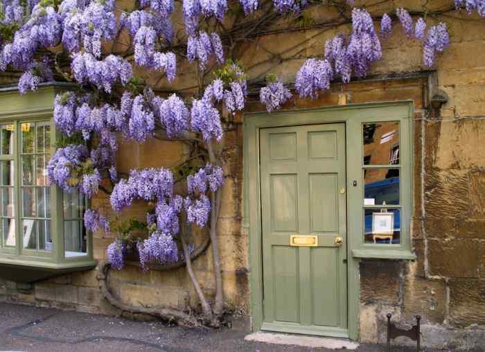Glicina adornando la entrada de la casa