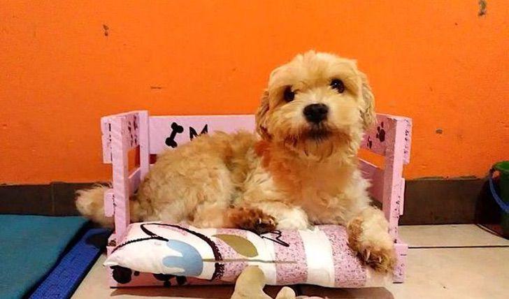 Perro de albergue acostado en una camita color rosa
