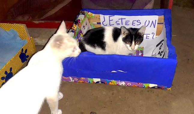 Gatos acostado en camitas