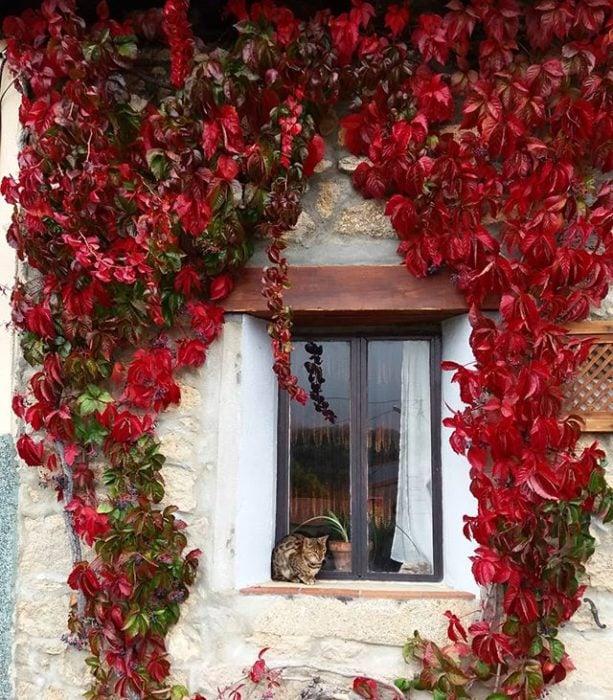 Parra Virgen decorando el exterior de una ventana