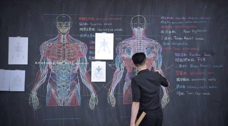 Chuan-Bin Chung, ilustrador y profesor de anatomía, dibujando el sistema musculatorio humano