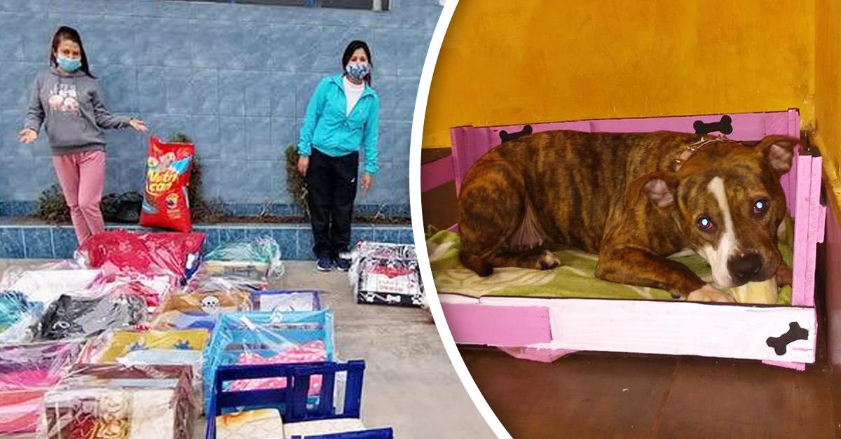 Profesora incentiva a sus alumnos a crear camitas para albergue de mascotas
