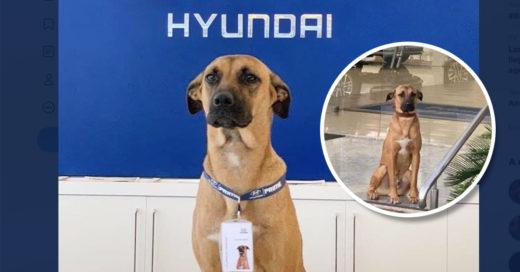 Agencia de autos adopta al perrito que dormía fuera de sus instalaciones