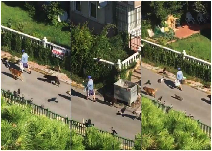 mujer en estambul seguida de decenas de animales callejeros