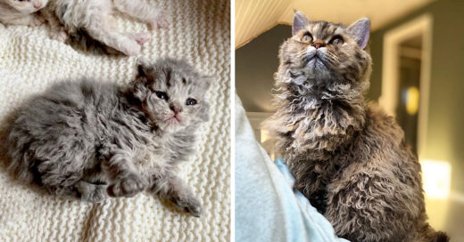 Estos gatitos tienen los rizos más lindos que todas envidiamos