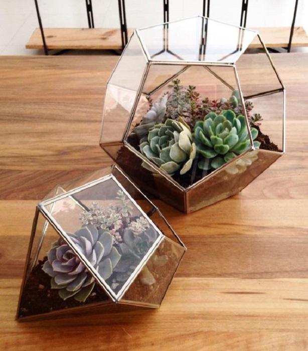 Macetas de cristal para suculentas