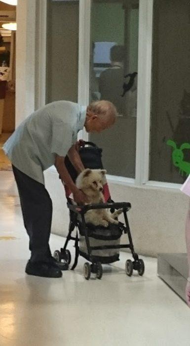 Anciano lleva a su perrito al veterinario en carriola (2)