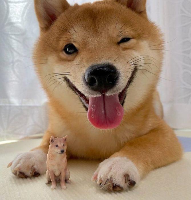 Shiba Inu Sonriente