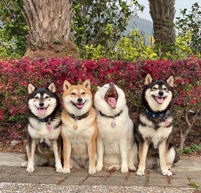 Perrito blanco arruina las sesiones de fotos con sus expresiones