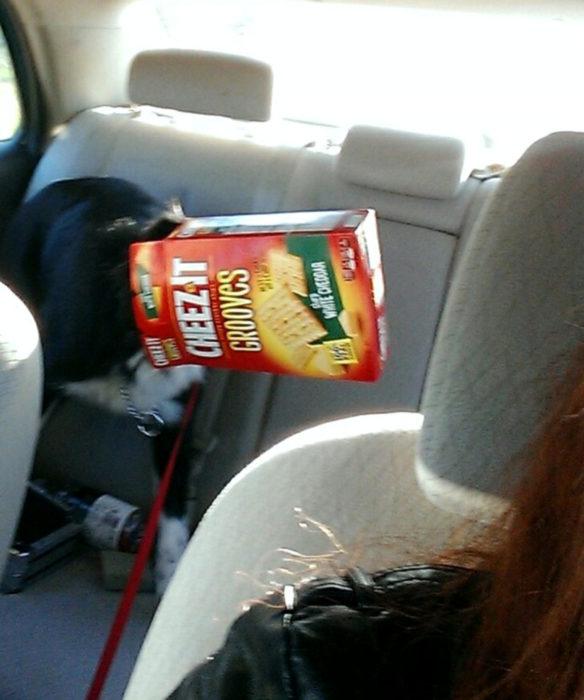 Perros graciosos haciendo tonterías mientras viajan en carro