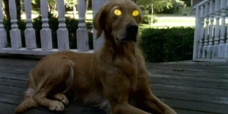 Perro con ojos amarillos de la serie ¿Le temes a la oscuridad?