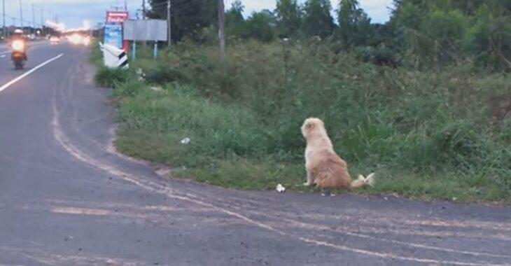 Dou Dou, un perro de pelaje blanco fue olvidado en la carretera cuando viajaba con su familia