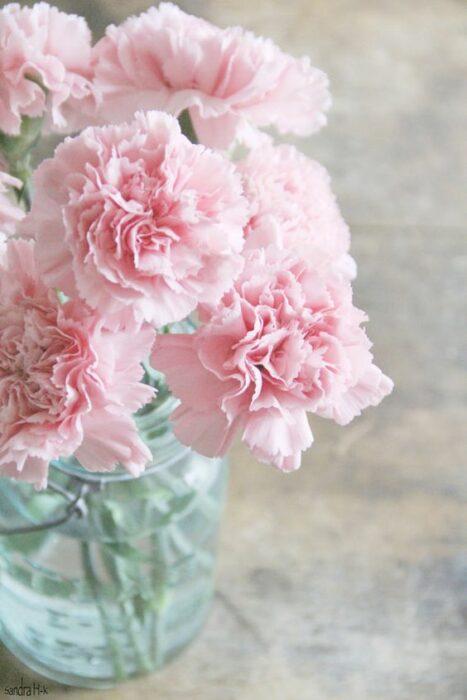 Claveles rosas en un florero con agua