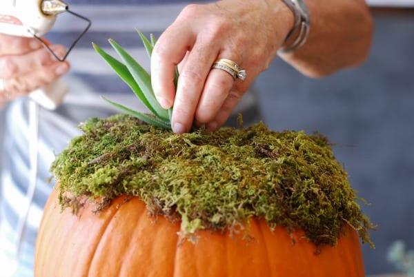 Decoración de otoño de calabazas con suculentas (4)