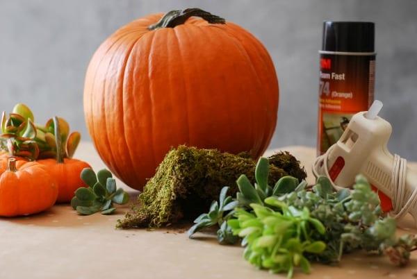 Decoración de otoño de calabazas con suculentas
