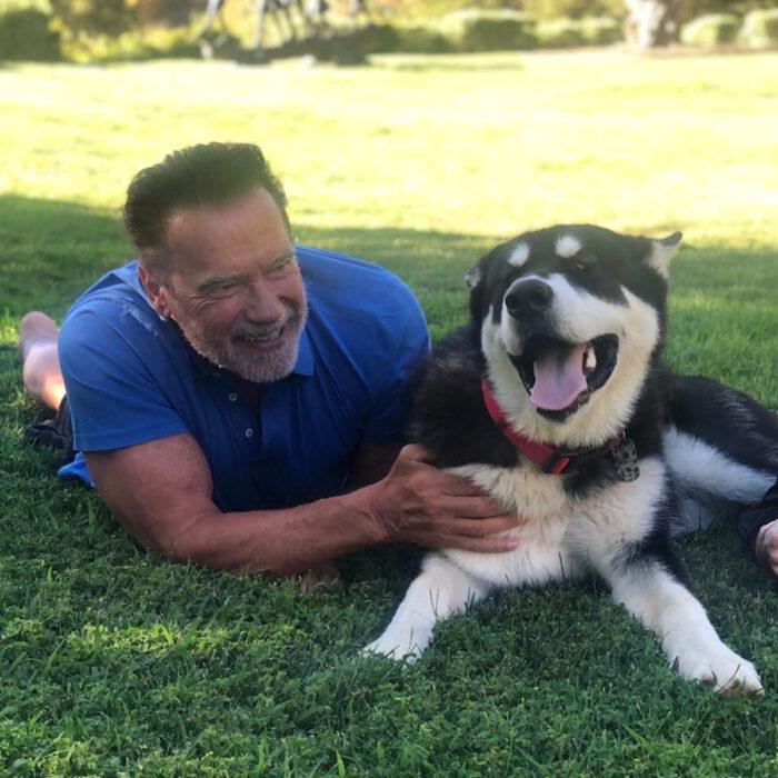 Famosos que han adoptado mascotas, perros o gatos; Aenold Schwarzenegger acostado en el jardín con su perro adulto huskey mestizo Dutch