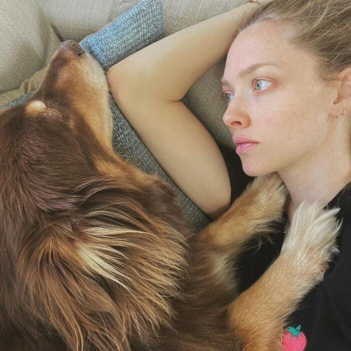 Famosos que han adoptado mascotas, perros o gatos; Amanda Seyfried con su perro pastor australiano café de pelo largo, Finn