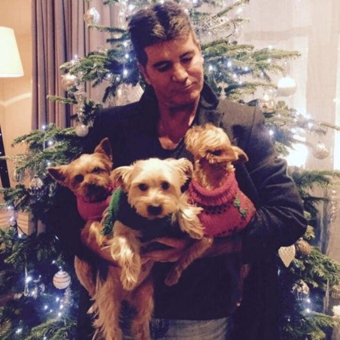 Famosos que han adoptado mascotas, perros o gatos; Simon Cowell frente al árbol de Navidad decorado, con sus tres perritas maltés color miel y blancas con suéteres navideños rojos con verde, Daisy, Freddie, Squiddly y Diddly