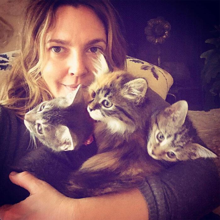 Famosos que han adoptado mascotas, perros o gatos; Drew Barrymore abrazando a sus tres gatitas de pelo largo y gris con rayas rengas, Douglas, Lucky y Peach