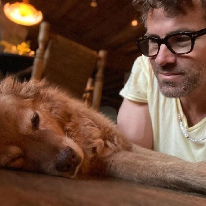 Famosos que han adoptado mascotas, perros o gatos; Ryan Reynolds mirando a su perrito golden retriever color miel, Baxter