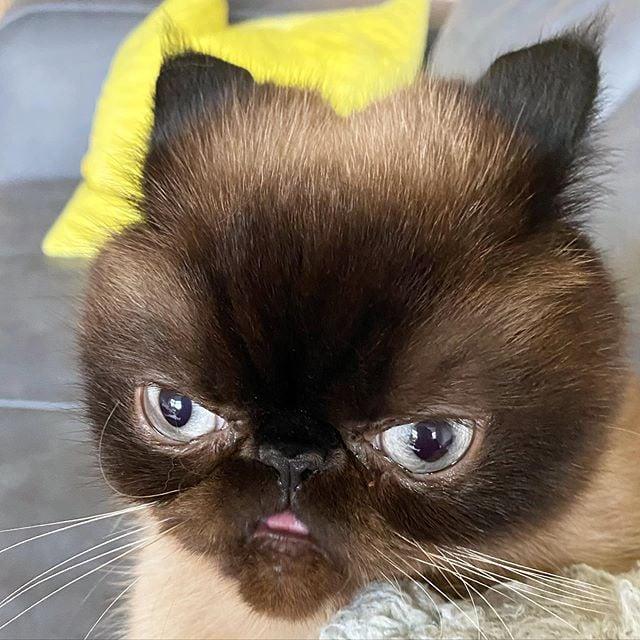 Ikuri, el gatito que siempre saca la lengua