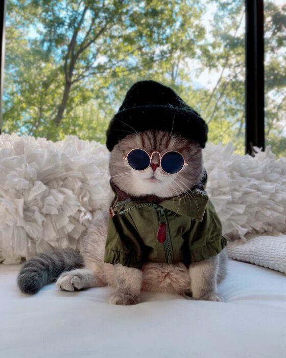 Benson, el felino a la moda; gato gris con rayas negras vestido con gorro negro, lentes de sol redondos con chamarra verde militar