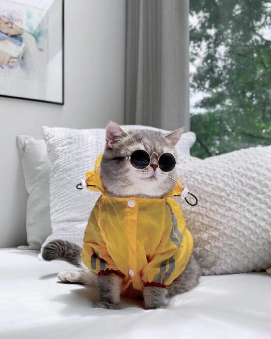 Benson, el felino a la moda; gato gris con rayas negras vestido con impermeable amarillo y lentes de sol redondos