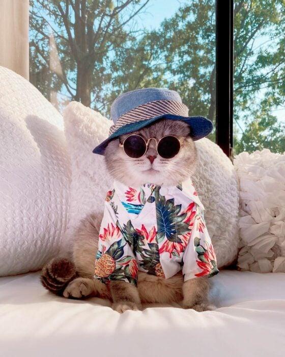 Benson, el felino a la moda; gato gris con rayas negras vestido con gorra de pescador, lentes de sol redondos, camisa hawaiana
