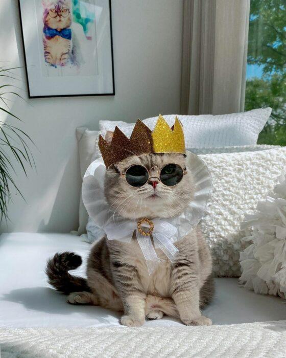 Benson, el felino a la moda; gato gris con rayas negras vestido con corona dorada, lentes de sol redondos, cuello con holanes