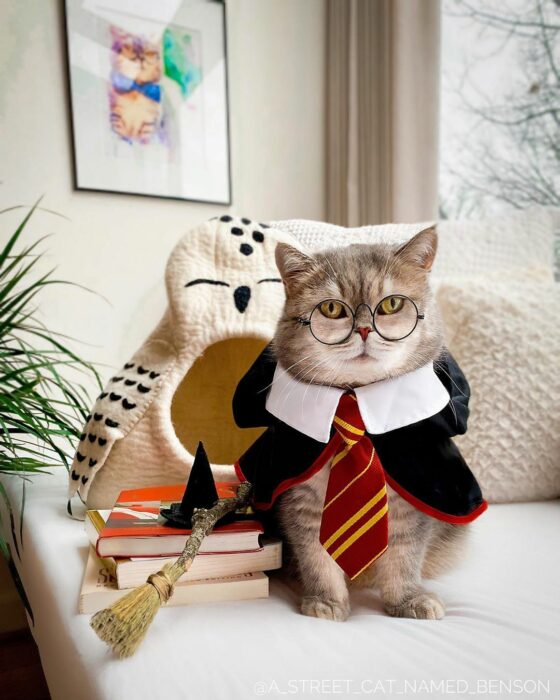 Benson, el felino a la moda; gato gris con rayas negras vestido con lentes de aumento redondos, disfrazado de Harry Potter, con escoba, lechuza y libros