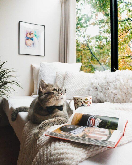 Benson, el felino a la moda; gato gris con rayas negras vestido con lentes de aumento redondos, moño negro, leyendo libros con una taza de café y té