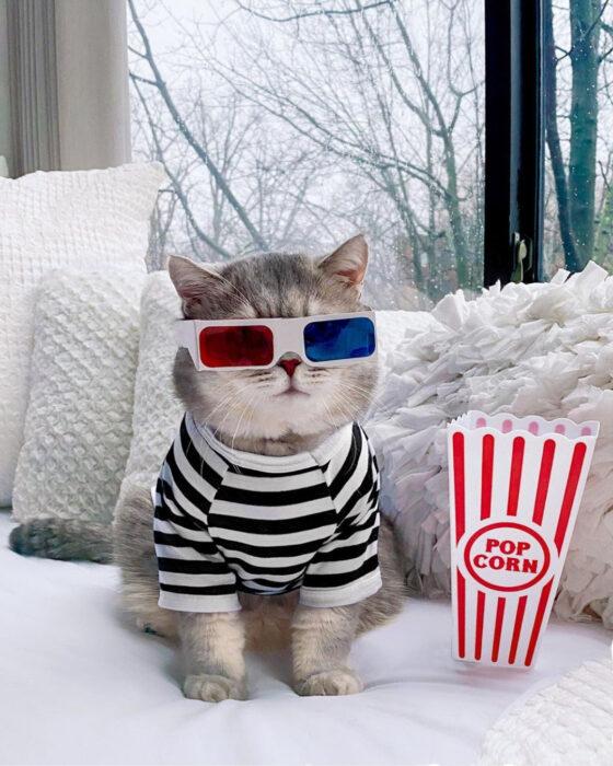 Benson, el felino a la moda; gato gris con rayas negras vestido con camisa a rayas blancas y negras, con lentes 3D y palomitas