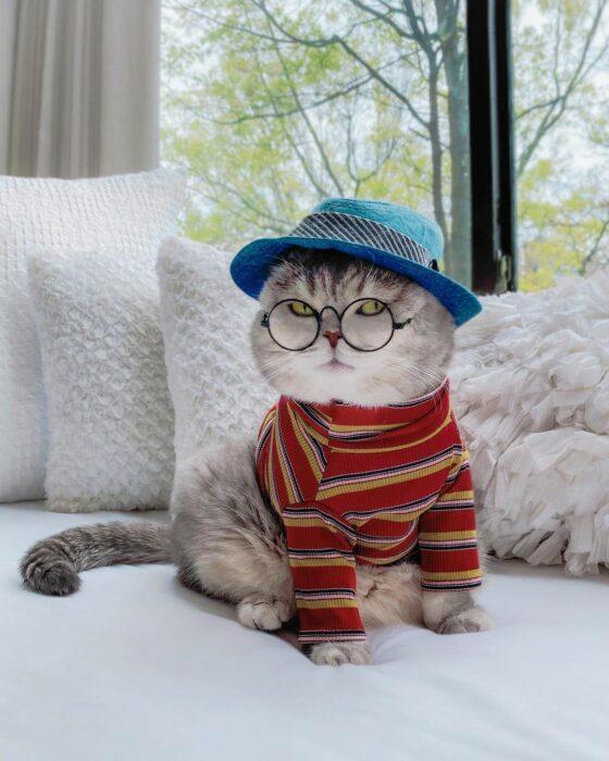 Benson, el felino a la moda; gato gris con rayas negras vestido con gorro de pescador azul mezclilla, lentes de aumento redondos, blusa de mangas largas y cuello de tortuga roja con rayas amarillas y negras
