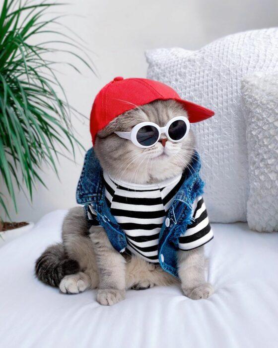 Benson, el felino a la moda; gato gris con rayas negras vestido con blusa rayada blanca y negra, gorra roja y lentes de sol redondos con armazón blanco