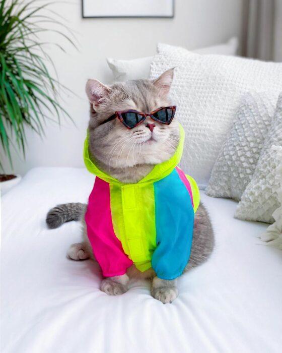 Benson, el felino a la moda; gato gris con rayas negras vestido con impermeble de colores verde neón, azul y rosa, con lentes de sol triangulares de animal print