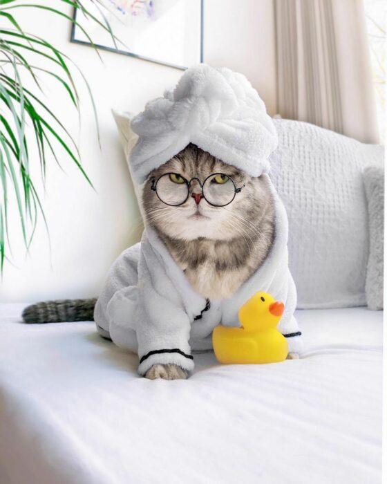 Benson, el felino a la moda; gato gris con rayas negras vestido con bata de baño con patito de goma, lentes redondos de aumento