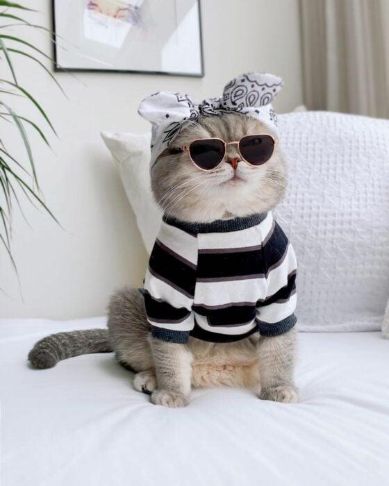 Benson, el felino a la moda; gato gris con rayas negras vestido con suéter de rayas negras y blancas, paliacate blanco y lentes de sol triangulares