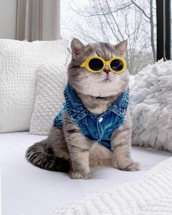 Benson, el felino a la moda; gato gris con rayas negras vestido con chaleco de mezclilla y lentes de sol redondos con armazón amarillo