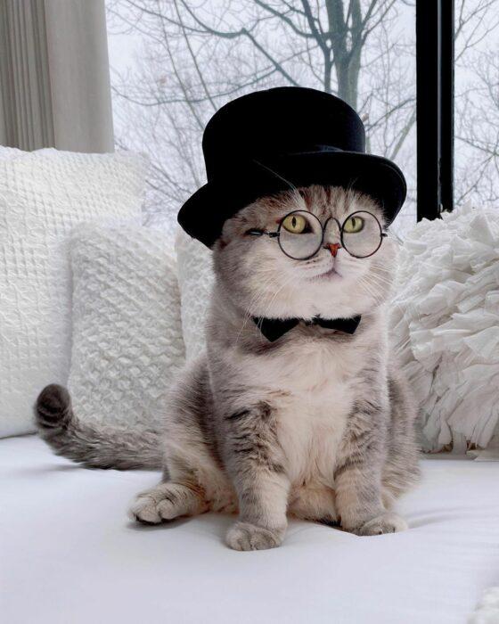 Benson, el felino a la moda; gato gris con rayas negras vestido con lentes de aumento redondos, moño negro y sombrero de copa