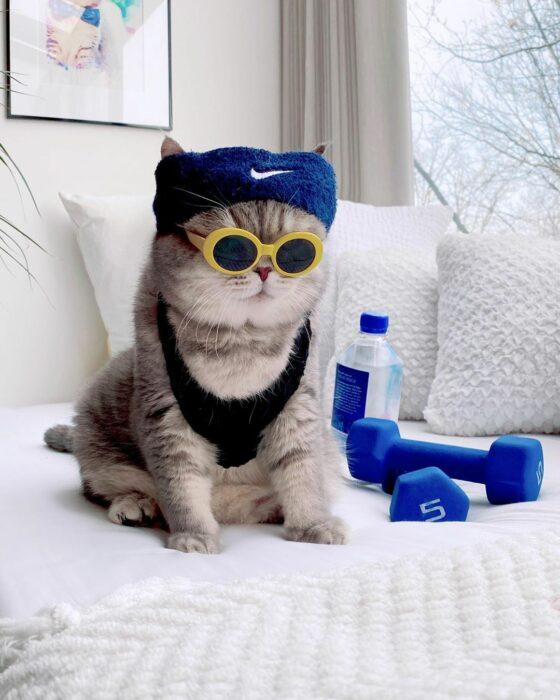 Benson, el felino a la moda; gato gris con rayas negras vestido con lentes de sol con armazón amarillo y ropa deporiva